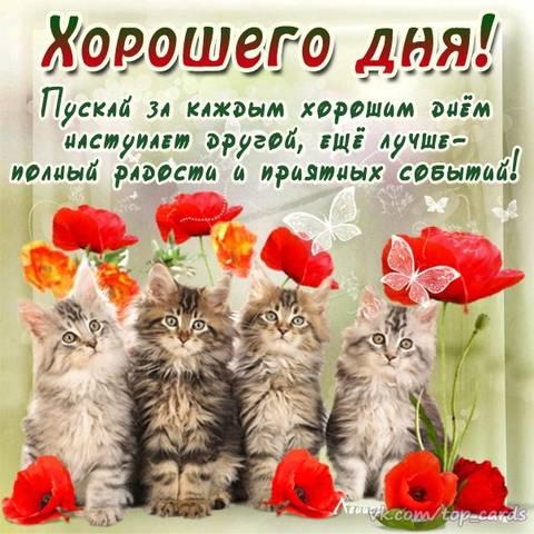 http://s6.uploads.ru/t/BwgQW.jpg