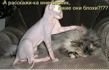 http://s6.uploads.ru/t/D9iNH.jpg