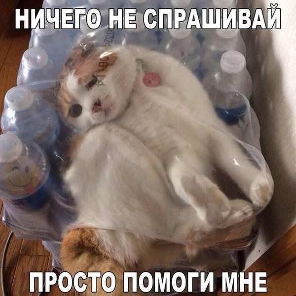 http://s6.uploads.ru/t/DSzwj.jpg