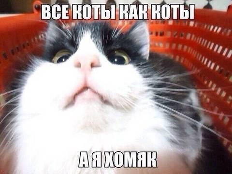 http://s6.uploads.ru/t/DaHCO.jpg