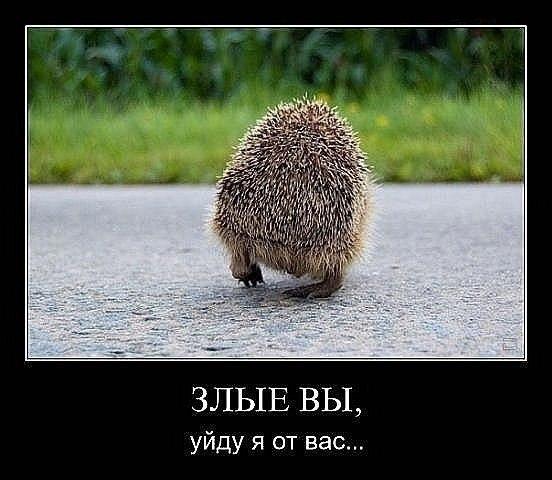 http://s6.uploads.ru/t/DjuBM.jpg
