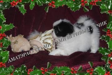 http://s6.uploads.ru/t/Dmn76.jpg