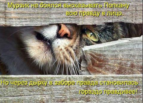 http://s6.uploads.ru/t/Fbt17.jpg