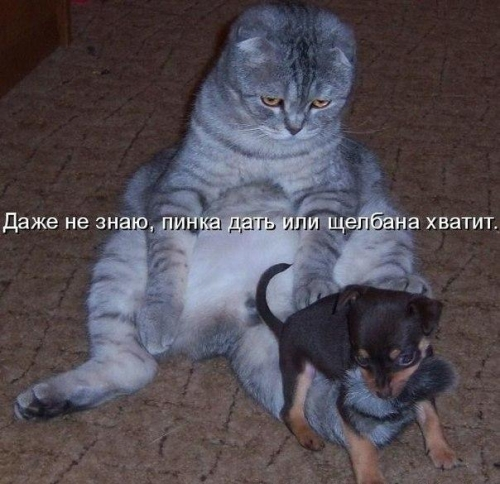 http://s6.uploads.ru/t/FyS91.jpg