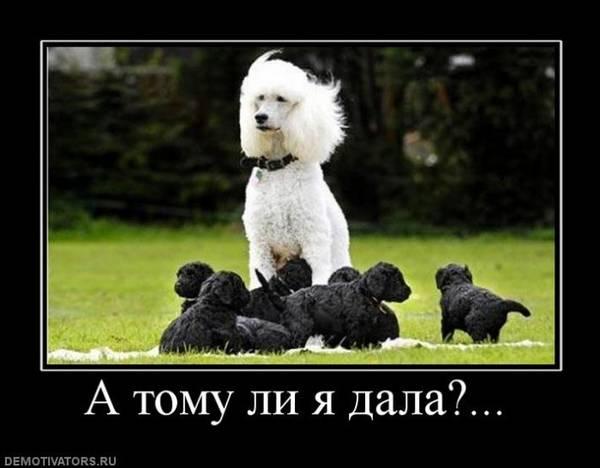 http://s6.uploads.ru/t/G9Fqe.jpg
