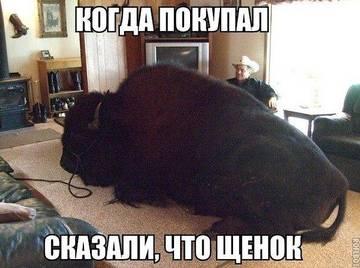 http://s6.uploads.ru/t/GBCOT.jpg