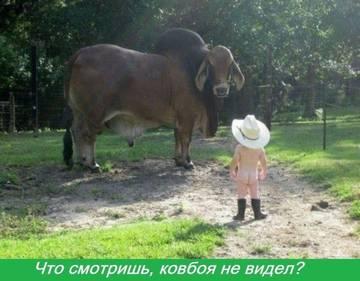 http://s6.uploads.ru/t/GvOBW.jpg