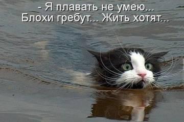 http://s6.uploads.ru/t/IYvkw.jpg