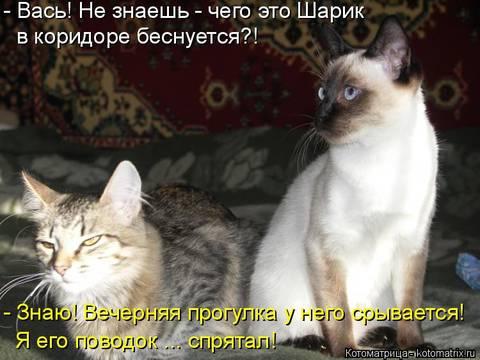 http://s6.uploads.ru/t/IfgPk.jpg