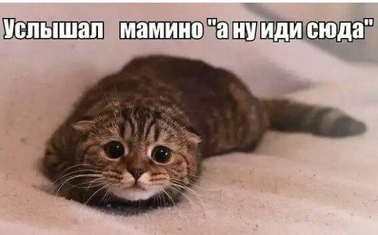 http://s6.uploads.ru/t/Ilyrk.jpg