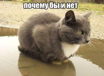 http://s6.uploads.ru/t/JA6rn.jpg