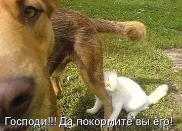 http://s6.uploads.ru/t/JUPuG.jpg