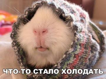 http://s6.uploads.ru/t/K2F6C.jpg