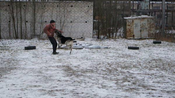 http://s6.uploads.ru/t/KUdBY.jpg