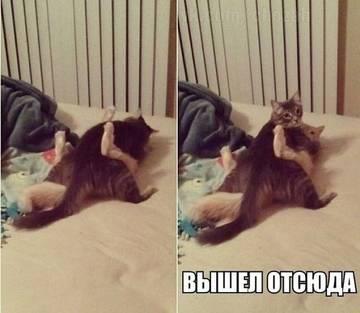 http://s6.uploads.ru/t/L0KuB.jpg