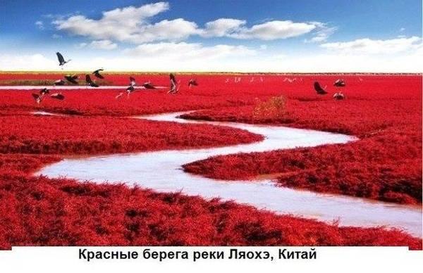 http://s6.uploads.ru/t/L0bOF.jpg