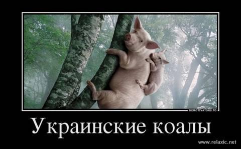 http://s6.uploads.ru/t/LX0jm.jpg