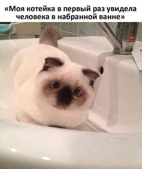 http://s6.uploads.ru/t/Lib0Z.jpg