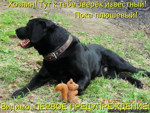 http://s6.uploads.ru/t/OfvUT.jpg