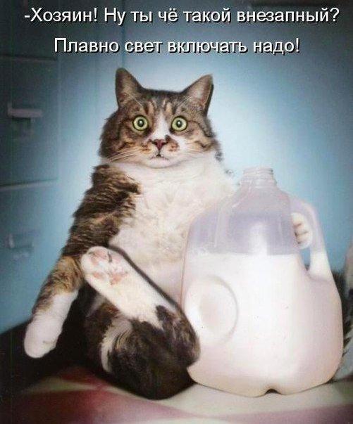 http://s6.uploads.ru/t/Oik0Q.jpg