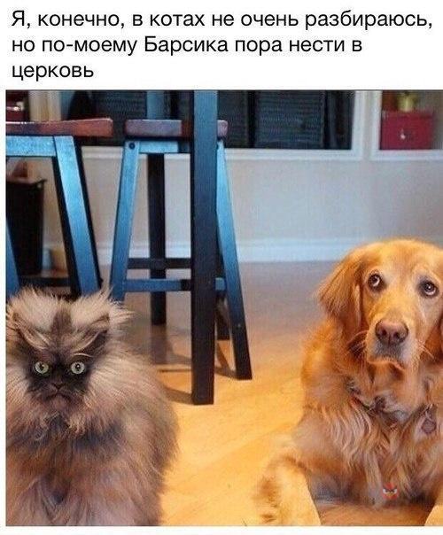http://s6.uploads.ru/t/OlAKC.jpg