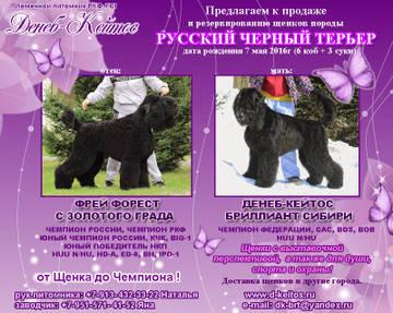 http://s6.uploads.ru/t/OoBw9.jpg