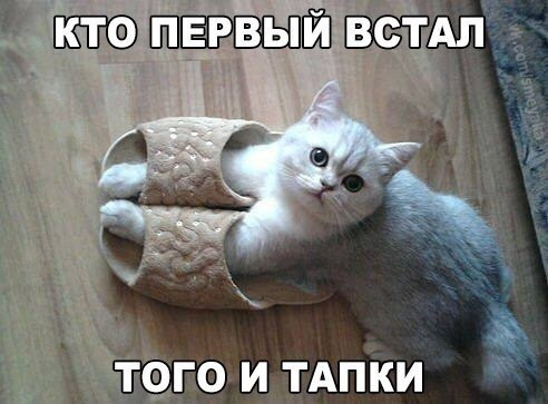 http://s6.uploads.ru/t/PZRyj.jpg