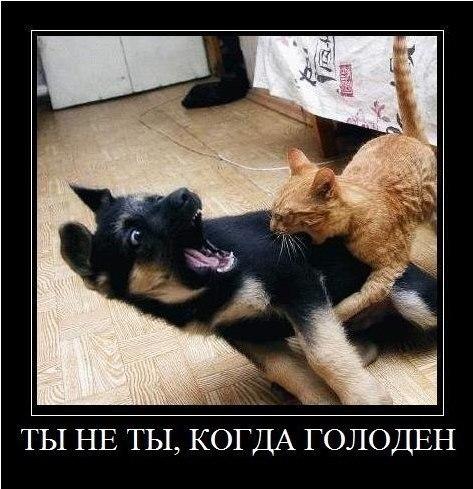 http://s6.uploads.ru/t/R91uU.jpg