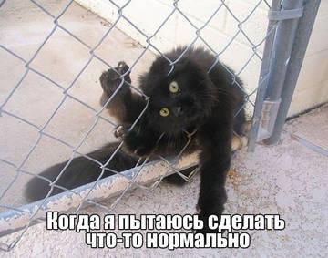 http://s6.uploads.ru/t/RMfQT.jpg