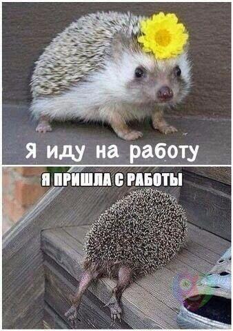 http://s6.uploads.ru/t/SEiY5.jpg