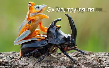 http://s6.uploads.ru/t/Sol0Q.jpg