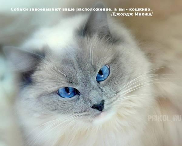 http://s6.uploads.ru/t/Ua7Vj.jpg