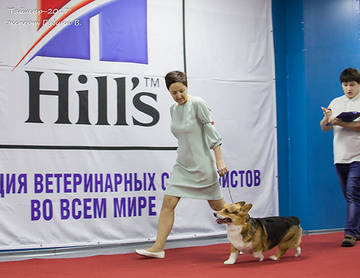http://s6.uploads.ru/t/WbZNX.jpg