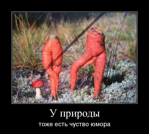 http://s6.uploads.ru/t/WuVFG.jpg