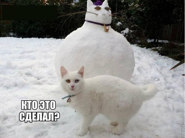 http://s6.uploads.ru/t/aByFO.jpg