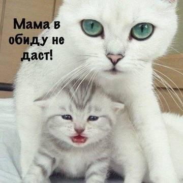 http://s6.uploads.ru/t/aLgsj.jpg