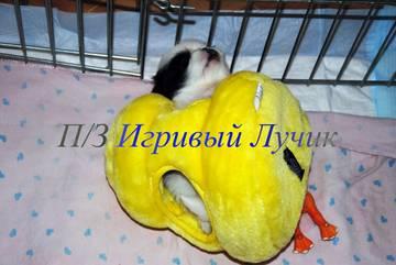 http://s6.uploads.ru/t/apWjU.jpg