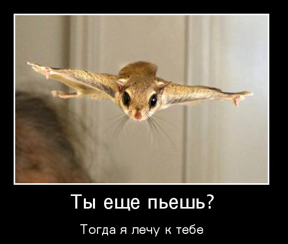 http://s6.uploads.ru/t/brg6U.png