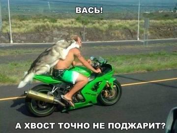 http://s6.uploads.ru/t/cq7n8.jpg