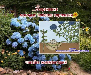 http://s6.uploads.ru/t/f2sIm.jpg
