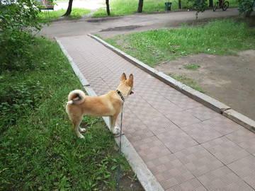 http://s6.uploads.ru/t/glkEu.jpg