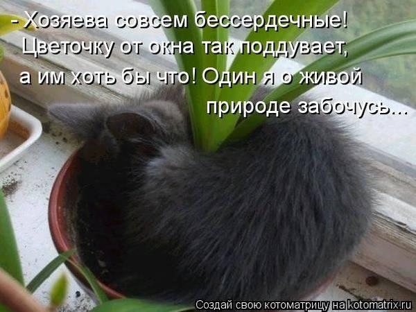 http://s6.uploads.ru/t/hFC0Q.jpg