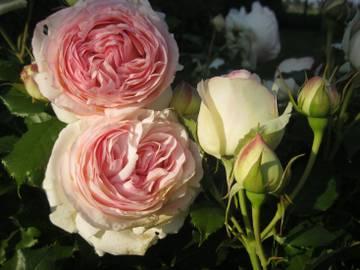 http://s6.uploads.ru/t/he0M2.jpg