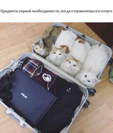 http://s6.uploads.ru/t/hkVQd.jpg