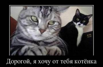 http://s6.uploads.ru/t/jHRY5.jpg
