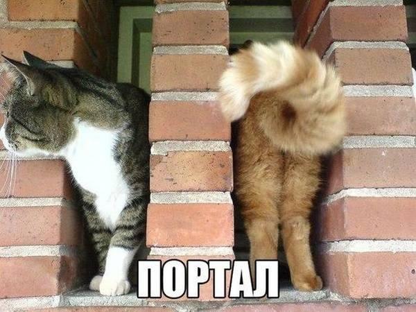 http://s6.uploads.ru/t/jJWkX.jpg
