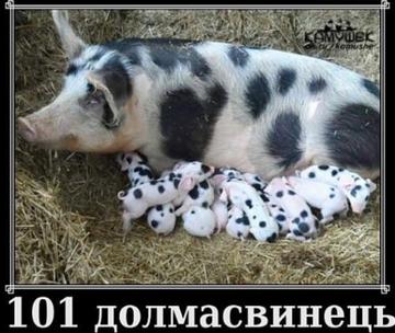 http://s6.uploads.ru/t/njVLP.png