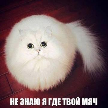http://s6.uploads.ru/t/nteuf.jpg