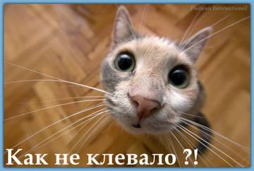 http://s6.uploads.ru/t/p0Trf.jpg