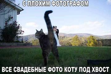 http://s6.uploads.ru/t/pvKYS.jpg